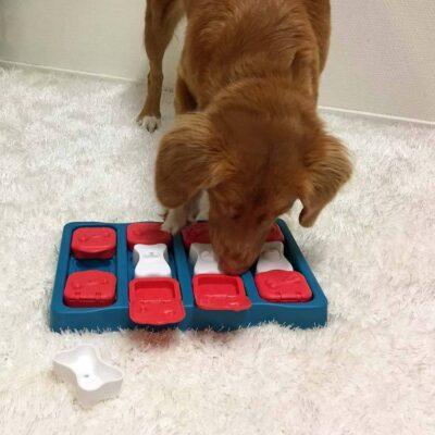 afbeelding Hondenpuzzel Dog Brick