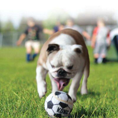 afbeelding Hondenspeelgoed Sport Balls