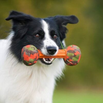 afbeelding Hondenspeelgoed Kleine Halter