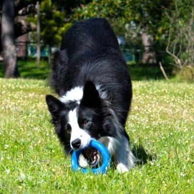 afbeelding Hondenspeelgoed Pop Upz Blauw