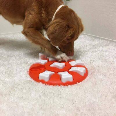afbeelding Hondenpuzzel Dog Smart